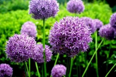 Pin On Gardening