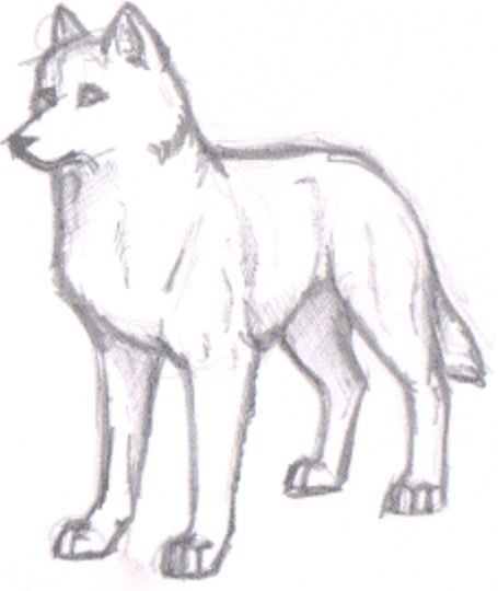 Basic Wolf Sketch With Images Sketches Wolf Drawing Easy