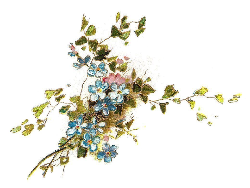 flower clip art vintage image of forget me not flowers