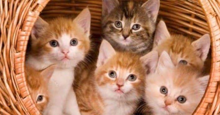 #kittensofinstagram #catlove #cutecat #animal #petstagram #ilovemycat #kittycat #dog #catsofig #catloversclub #instagood #ilovecats #blackcat #dogsofinstagram #catsofinsta #katze #catslover #caturday #catsoftheworld #photooftheday #catphoto #chat #catsofworld #neko #katzen #catsoftheday #features #catscatscats #nature #gatosdeinstagram🐈