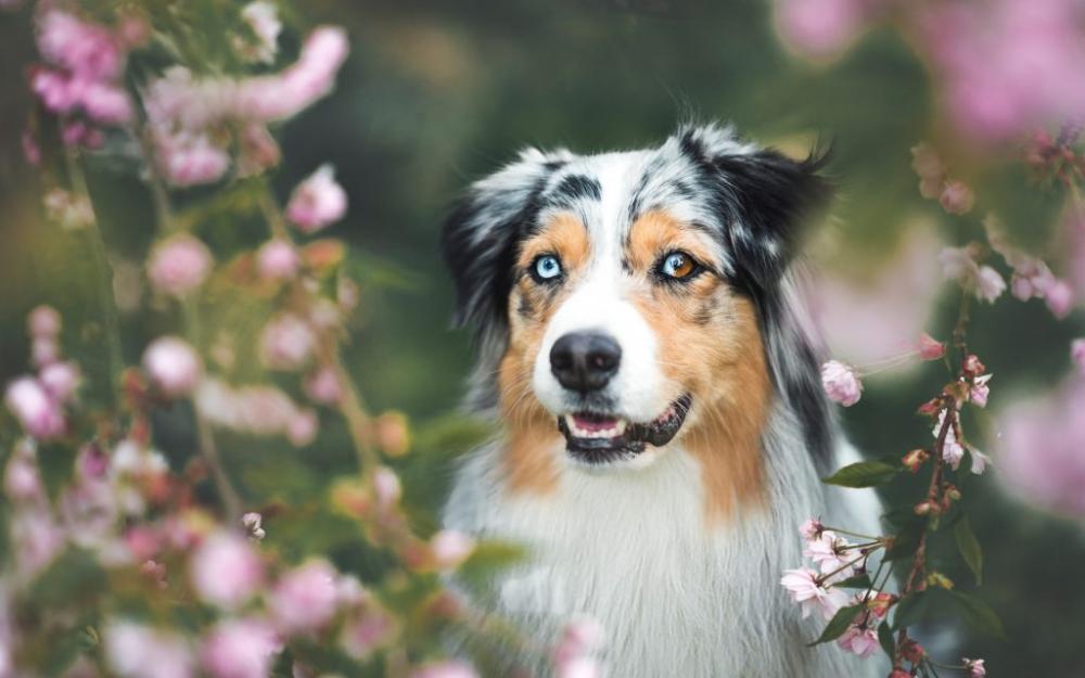 Wie Blaugrune Algen Ihrem Hund Schadigen Konnen Meinhaustier100