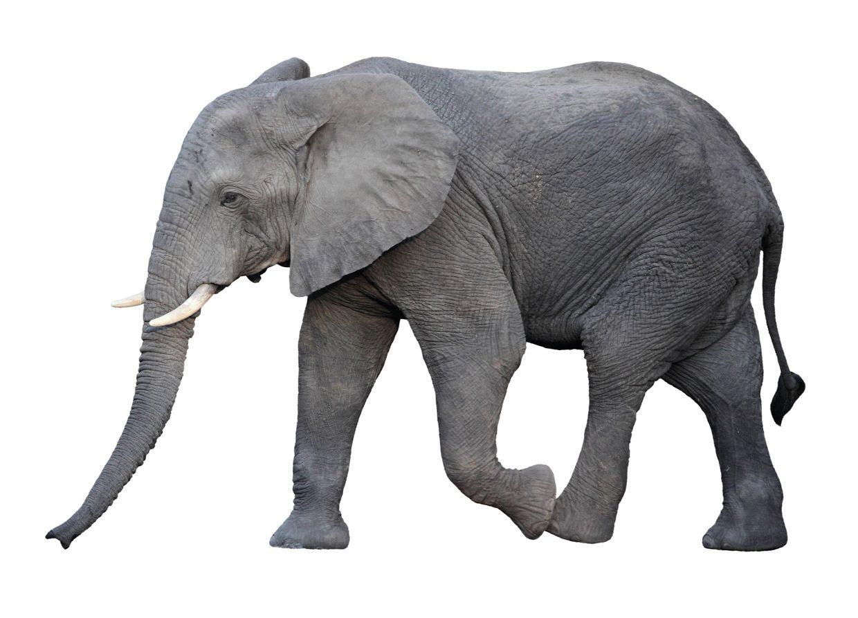 Elephant Van Insurance Quotes - Quotes nordicquote.com