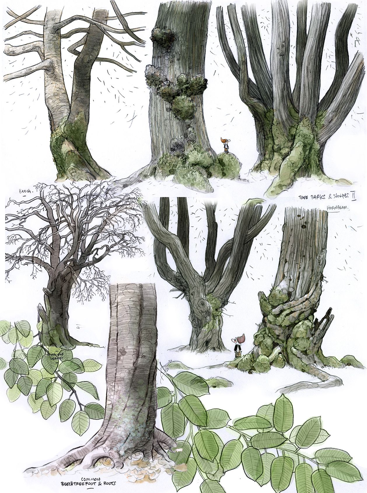 Pin By Scott Merrell On Illustration Leaf Drawing Drawings Art