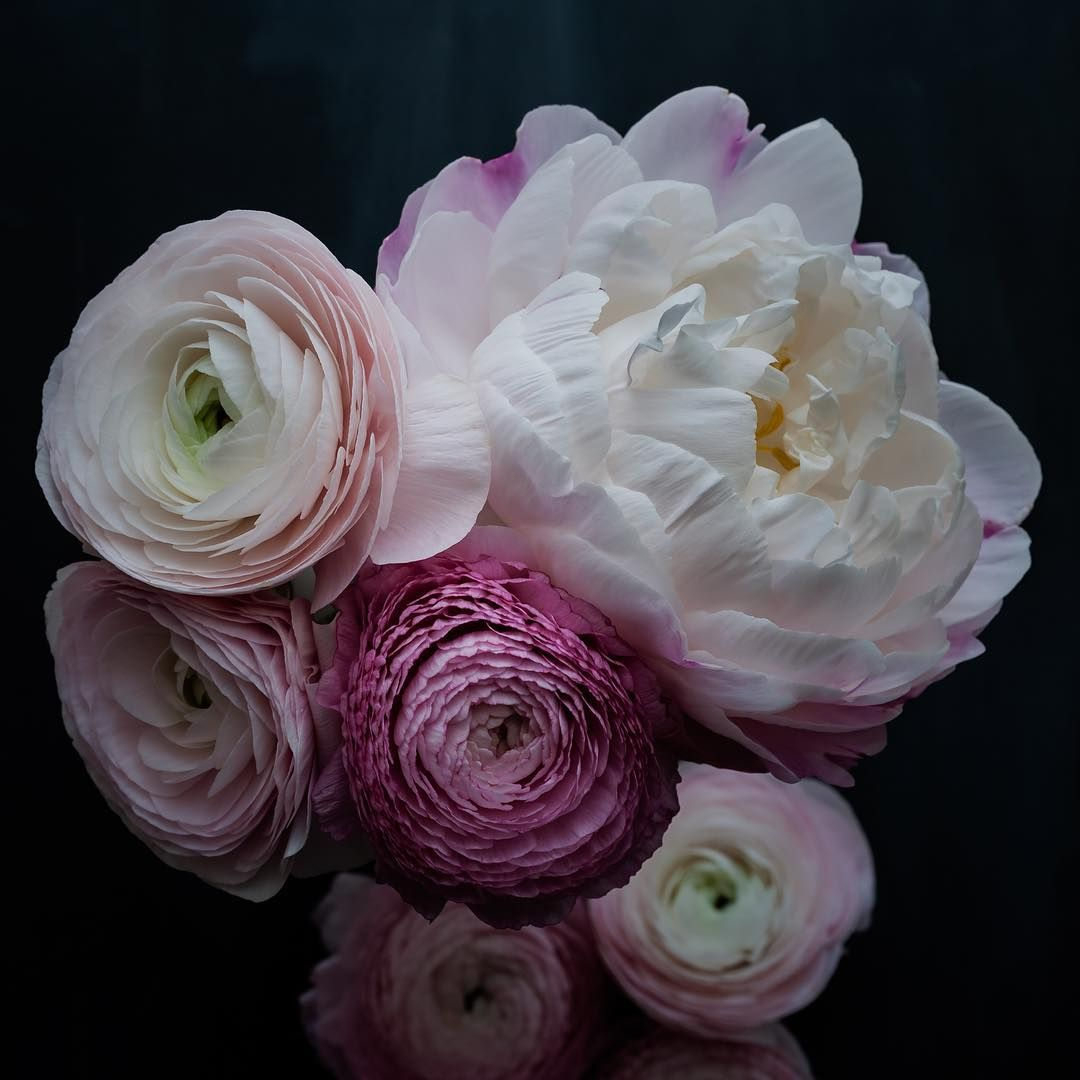 Good morning! The first peony of the season, and pretty ranunculus... Every time I look at them, I smile  #itsthelittlethings #itsamoodywednesday  Have a beautiful day xx
