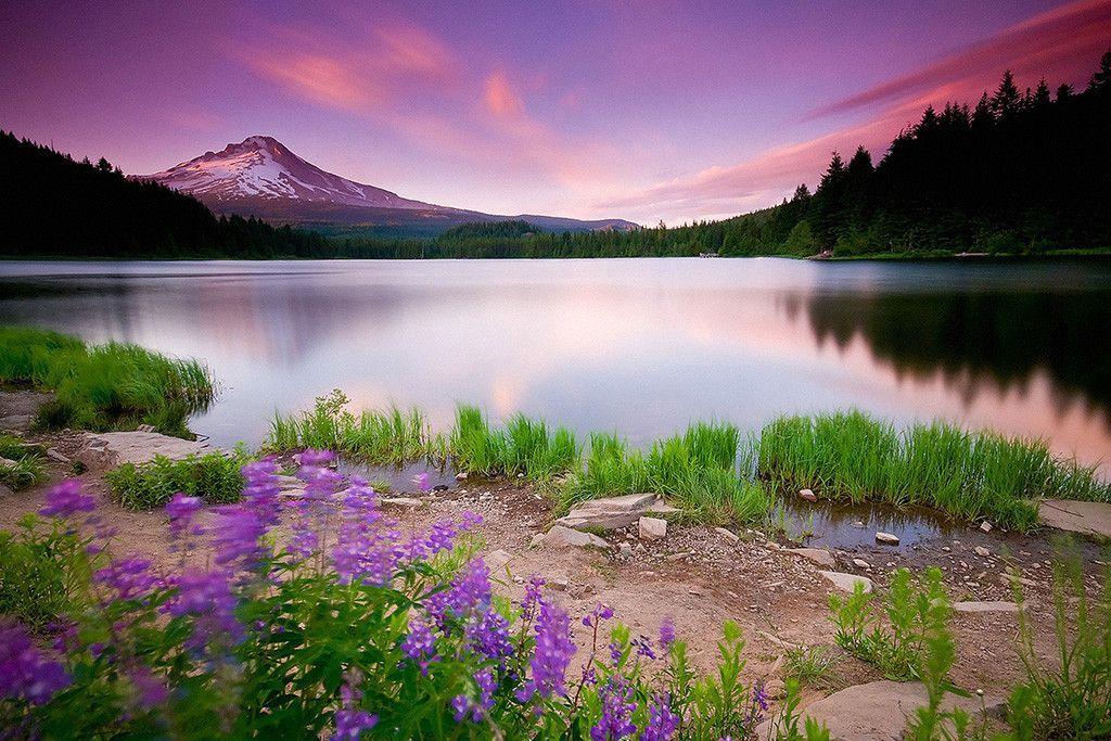 Beautiful Landscape Nature Lake Sunset Flowers Mountains Poster Beautiful Landscape Wallpaper Beautiful Nature Wallpaper Landscape Wallpaper