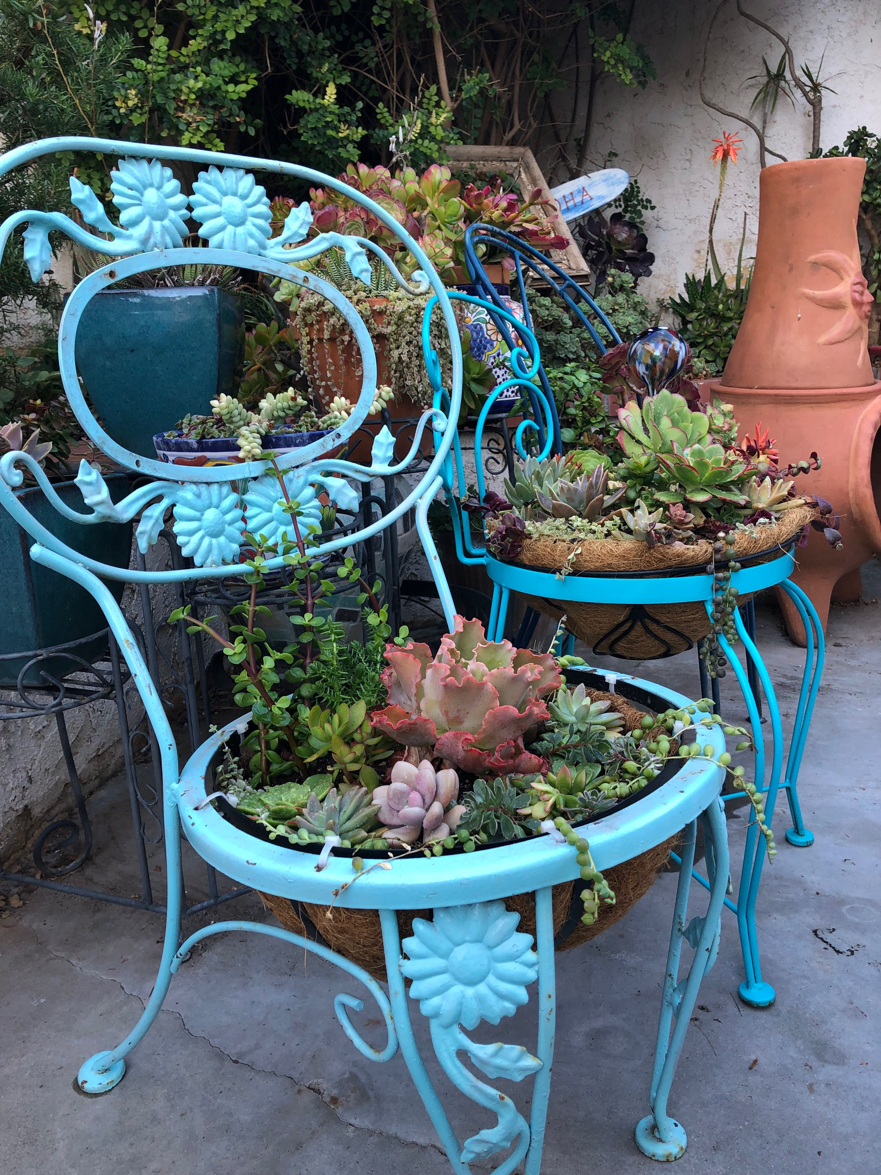 Yard Sale Patio Chairs Filled With Succulents Teacup Gardens Mini Succulents Succulents