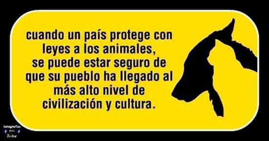 Proteccion animal, SI!!!