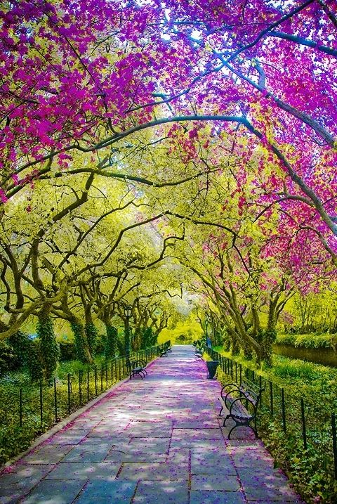 Central Park in the spring, New York City