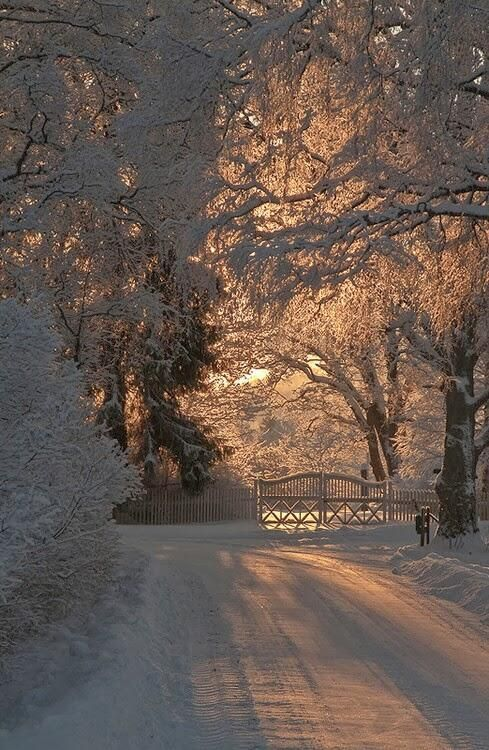 winter wonderland; I'm not the biggest fan of snow, but it does have a quiet beauty that no other element of nature has, in my opinion.