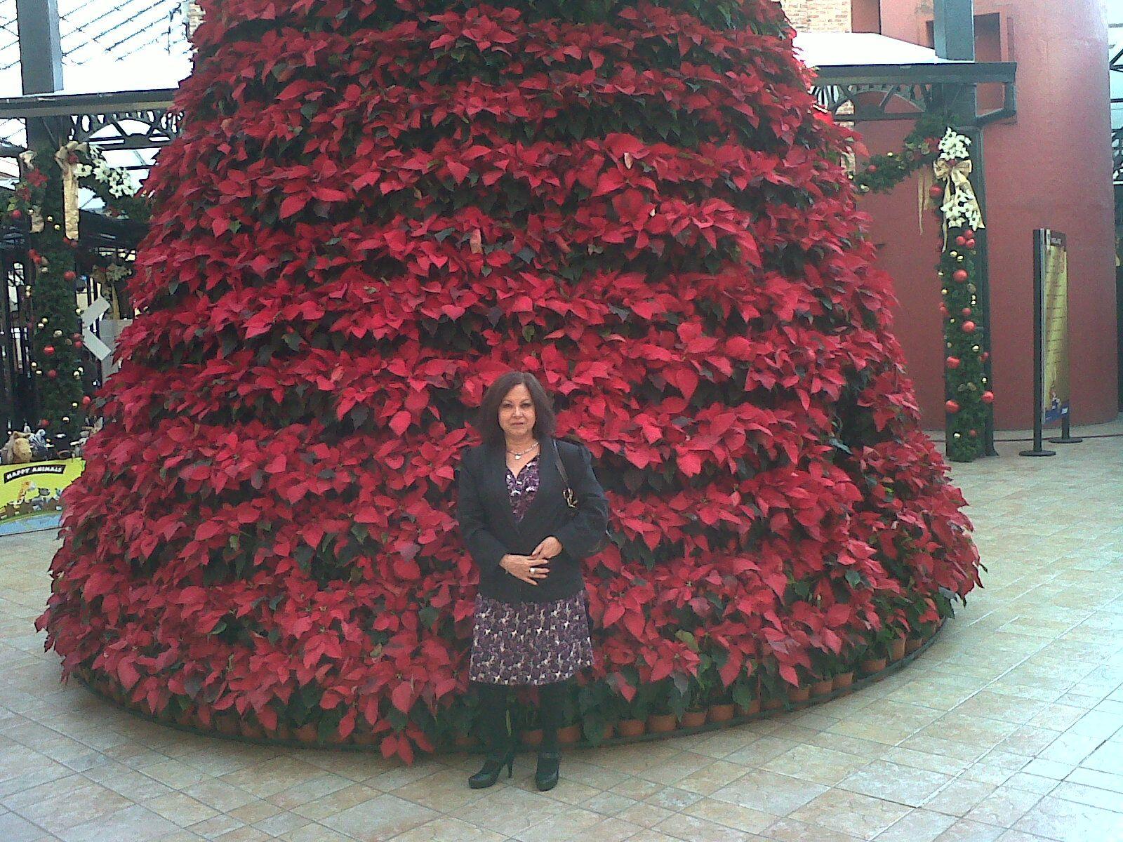 El significado y las leyendas del árbol de navidad en www.jesusmariayjoseenposadas.mex.tl