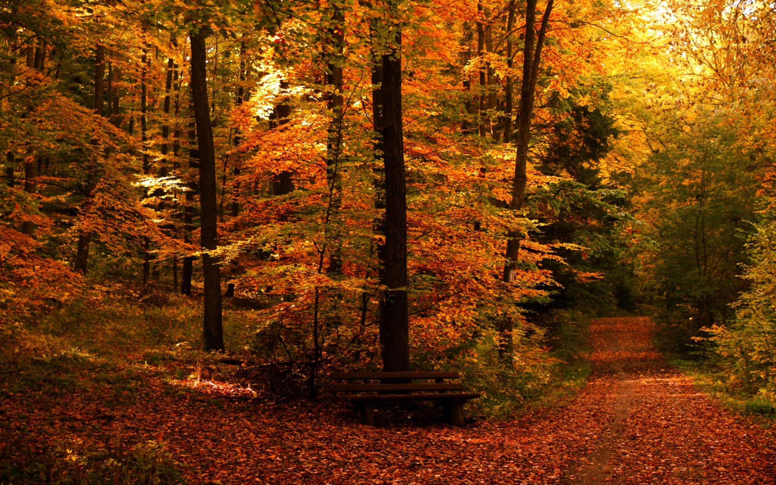 Google Autumn Wallpaper For Desktop Desktop Backgrounds Desktop Wallpaper Autumn Fall Backgrounds Fall Autumn Landscape Landscape Wallpaper Fall Pictures