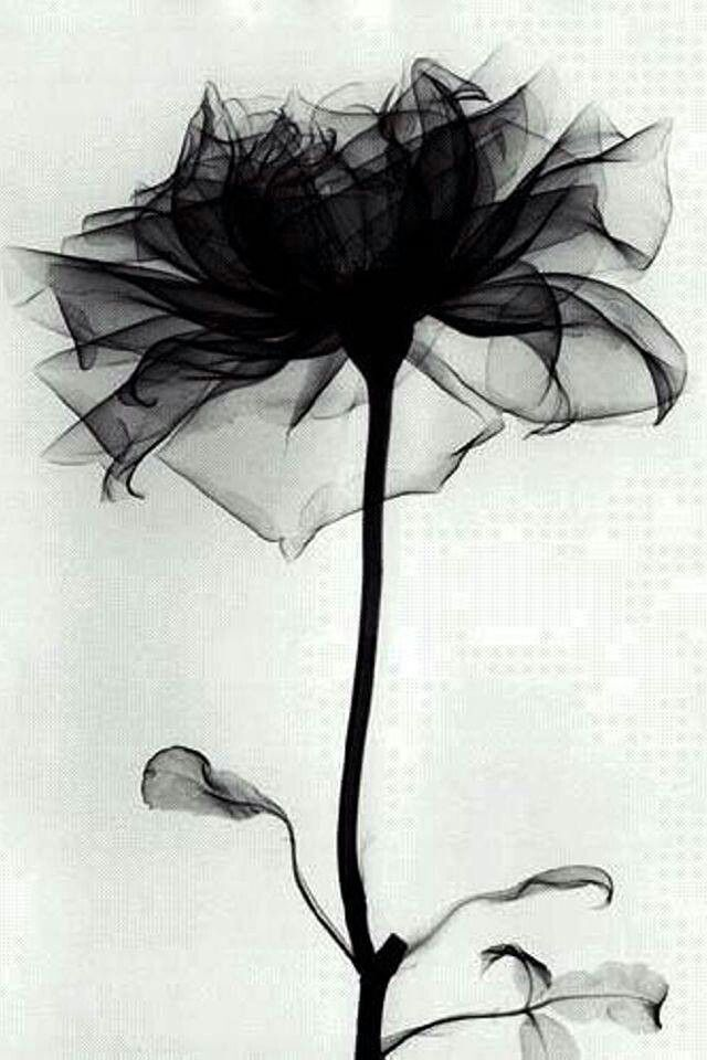 X Ray Of Rose Watercolor Amazing Tattoo For Me Yeti: Photo (ZsaZsa Bellagio Tumblr)