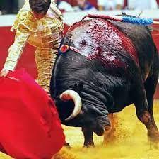 Bildresultat för tjurfäktare