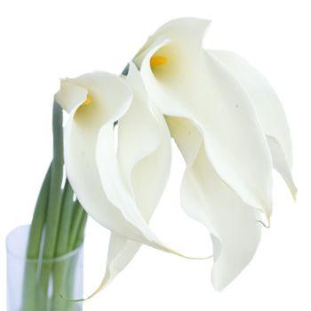 Arryn's bouquet flower.