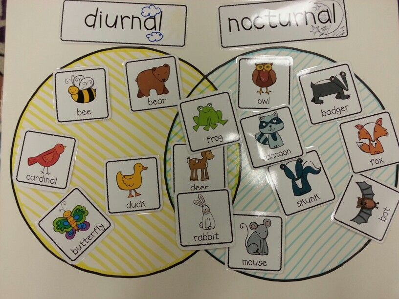Learning about Nocturnal Animals Free Printable Activities for ...
