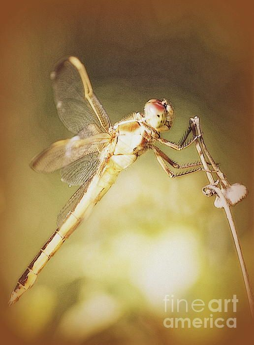"""Love the dragonfly's """"smile""""! NOW available on iPhone cases!!"""