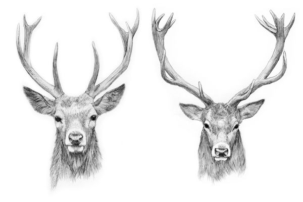 Tattoo Vorlagen 60 Kostenlose Tiermotive