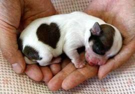 heart-shaped spot <3
