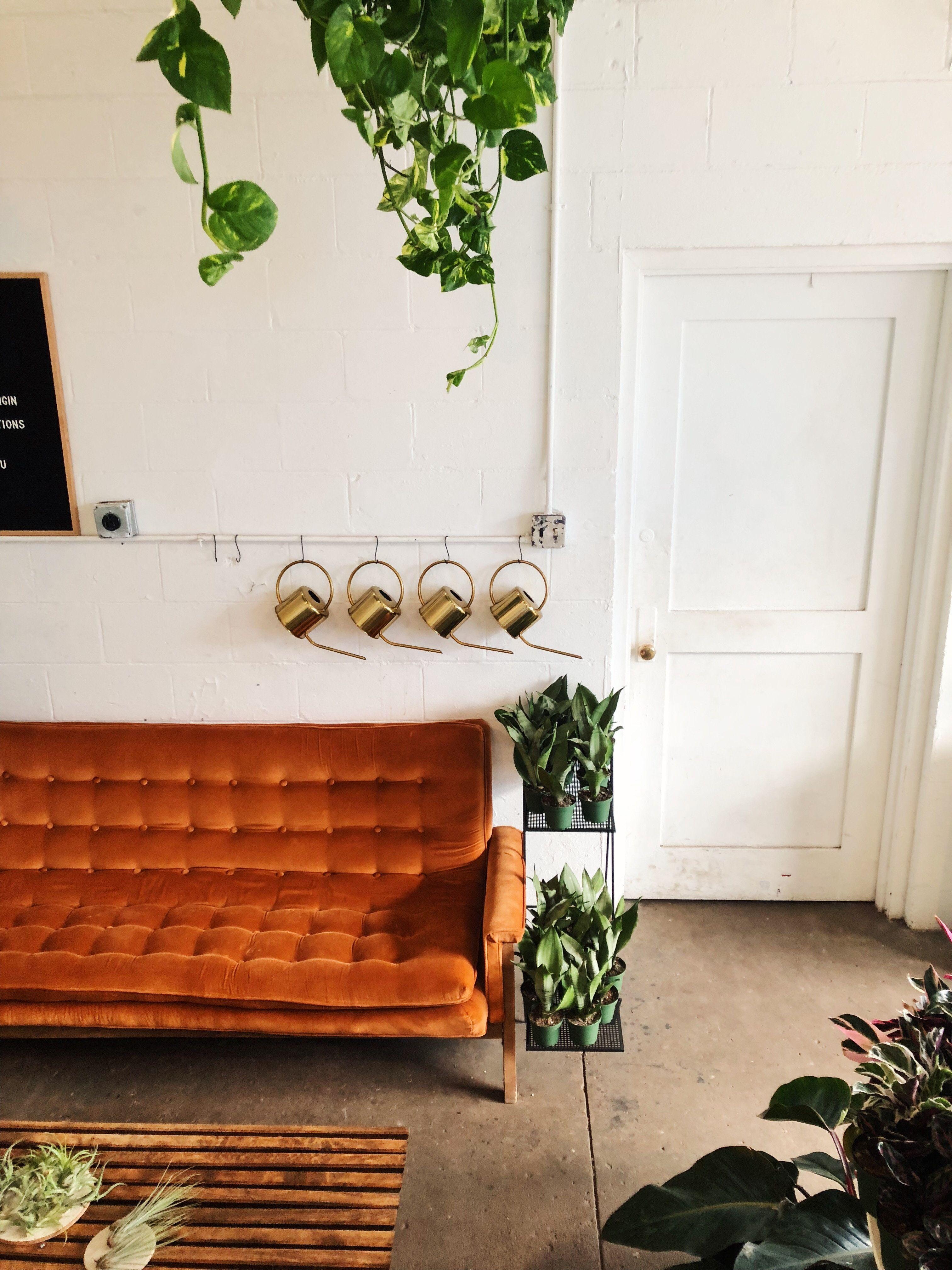 Pflanzen, Die Auch Mit Wenig Pflege Berleben #Zimmerpflanzen #Green #