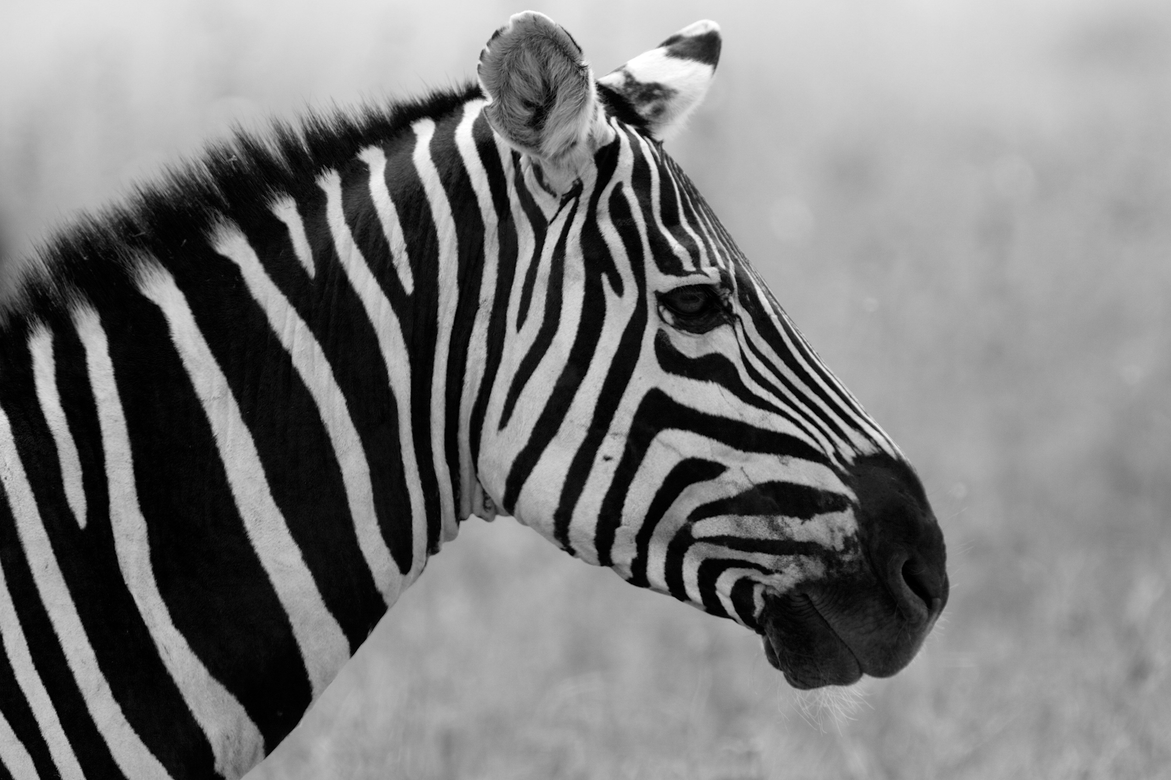 black and white - Google Search | b&w. | Pinterest ...