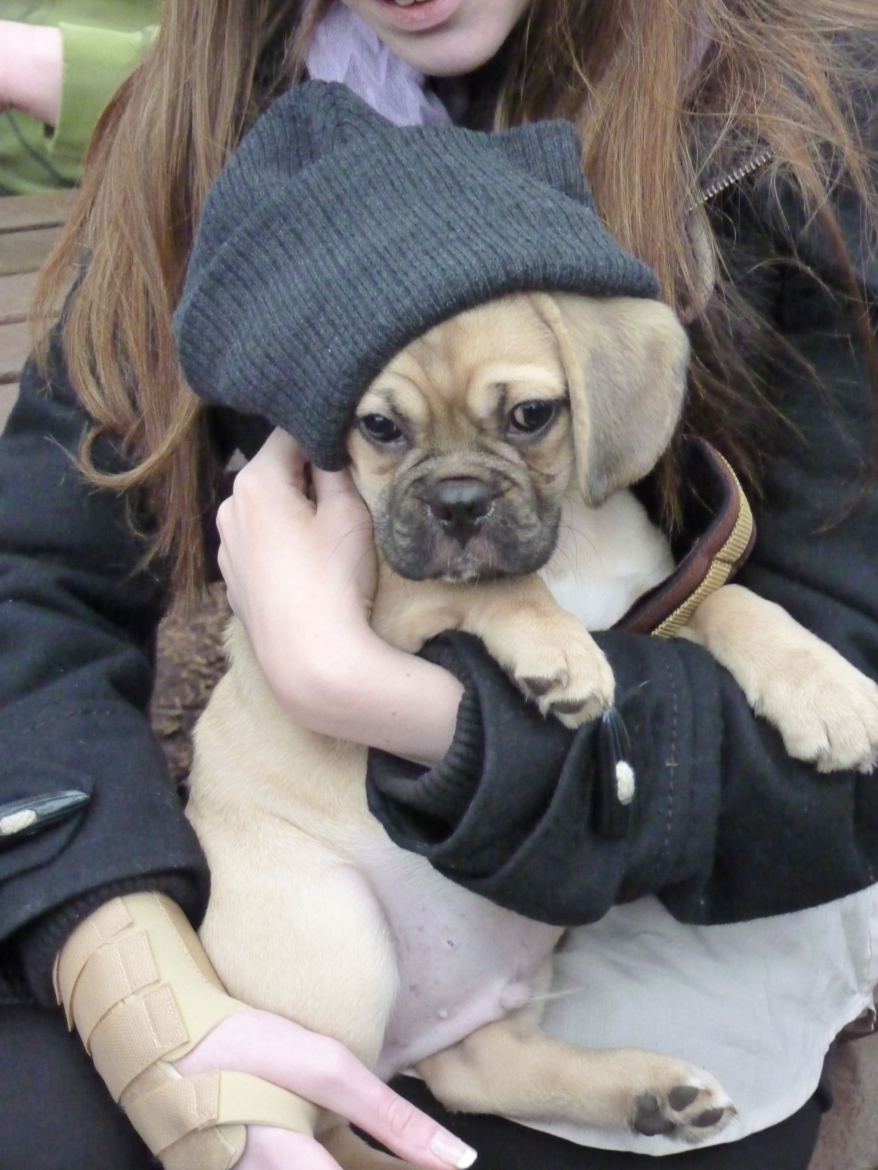 Puggle With Images Puggle Puppies Puggle