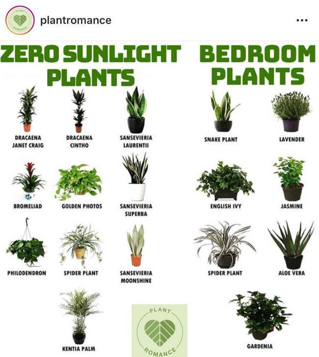 5 Overlooked Plants That Can Survive In The (Almost) Dark, #bookshelfdecorlights #Dark #Over...