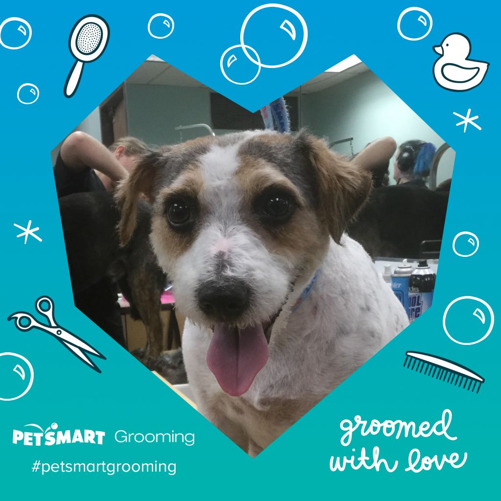 Heres my pet photo with images animal photo pets