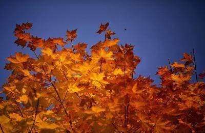 Dandridge TN in the fall