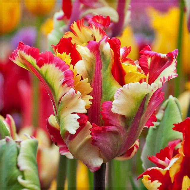 Tulip Mysteries • Colorists Gone Wild by victorvonsalza