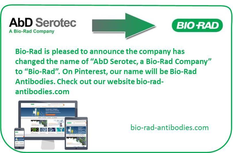 Pin By Bio Rad Antibodies On