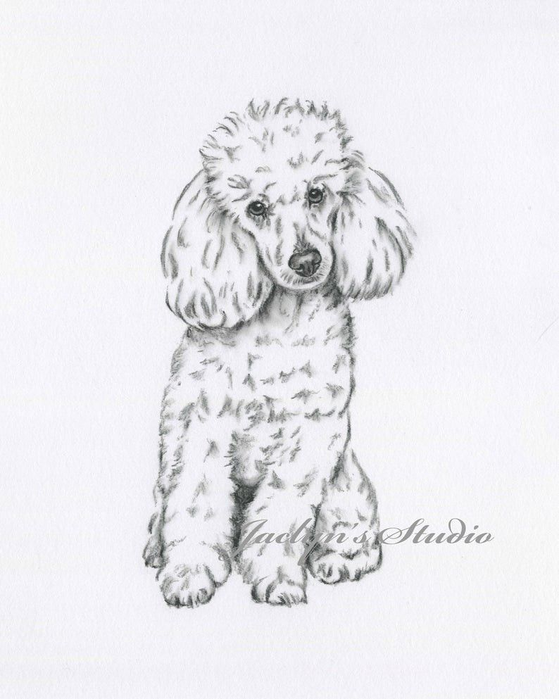 Pin De Natalia Kosinska En Dla Mamy Perros En Caricatura Perros Dibujos A Lapiz Dibujo De Perro
