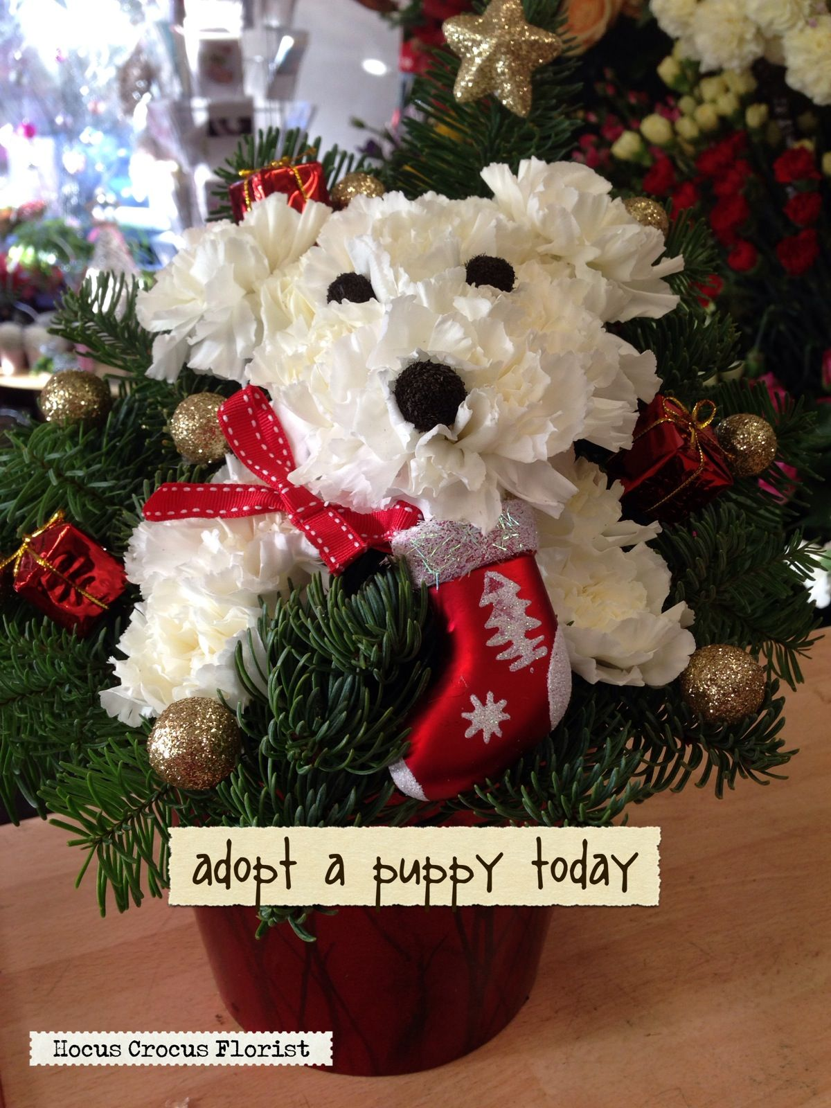 Cute Doggy Made From Carnations Like Us On Facebook Search Hocus