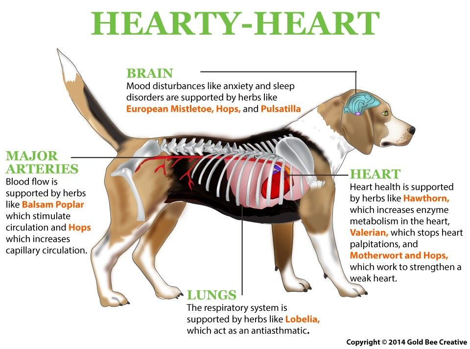 Hearty Heart For Dogs Turmeric Training Your Dog Turmeric Paste