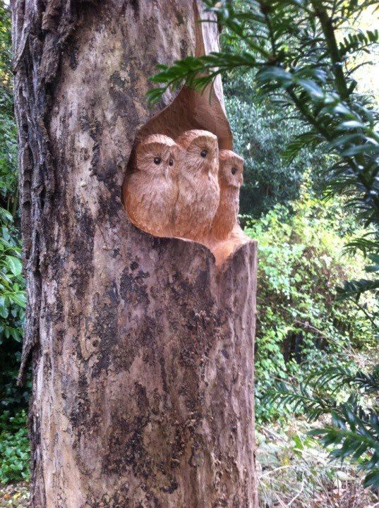 Owls carved with a chainsaw tree sculpture pinterest