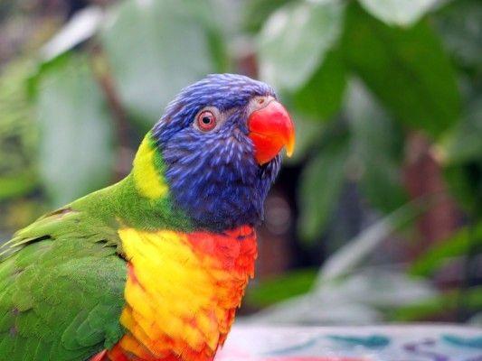 #perruche ou #perroquet