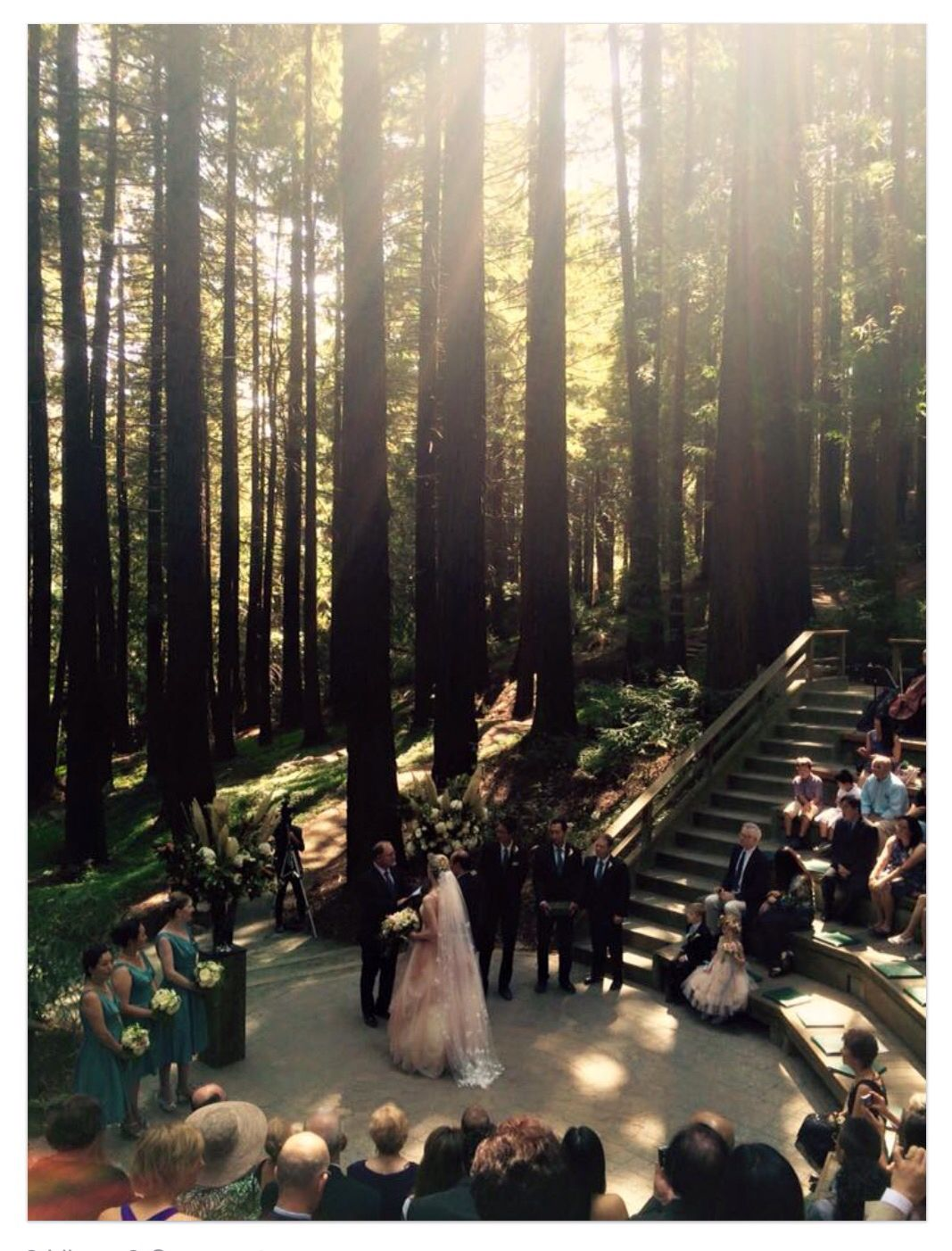 Wedding in the woods...gorgeous redwood trees are a dynamic backdrop! #AReveEvents www.AReveEvents.co
