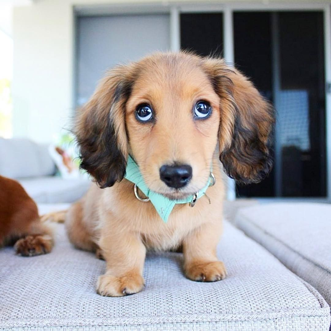 Benefits Of Ice Cubes For Dogs Dogdogs Dachshund Breed Dachshund Clever Dog
