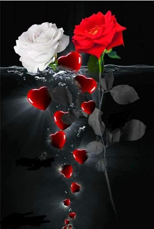 Viele Herzen, schöne Blumen. Danke Daizo💗.