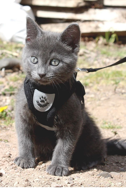 Pin on How to feed cute little blue cats