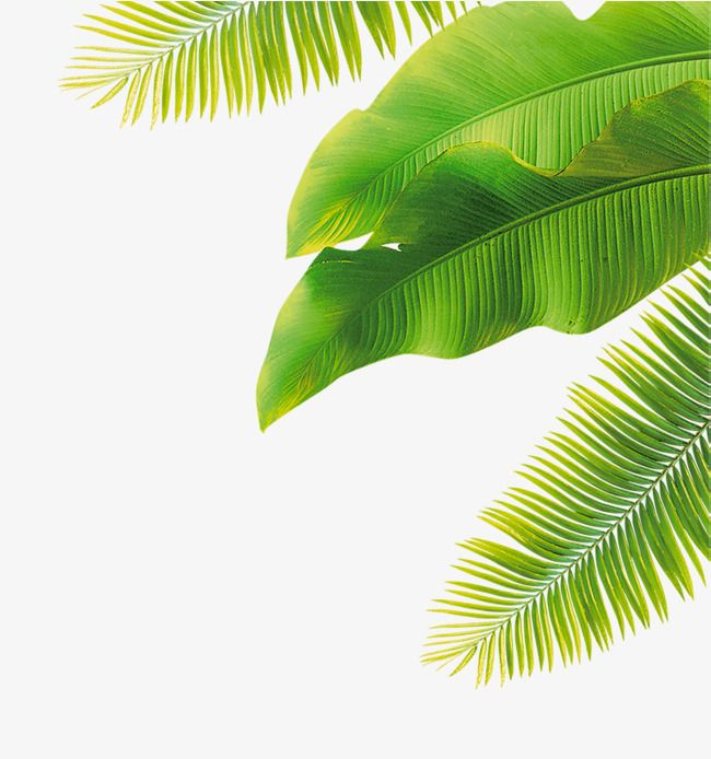 Tropical Leaves Png Find high quality tropical leaves clipart, all png clipart images with transparent backgroud can be download for free! overwatch dva wallpaper