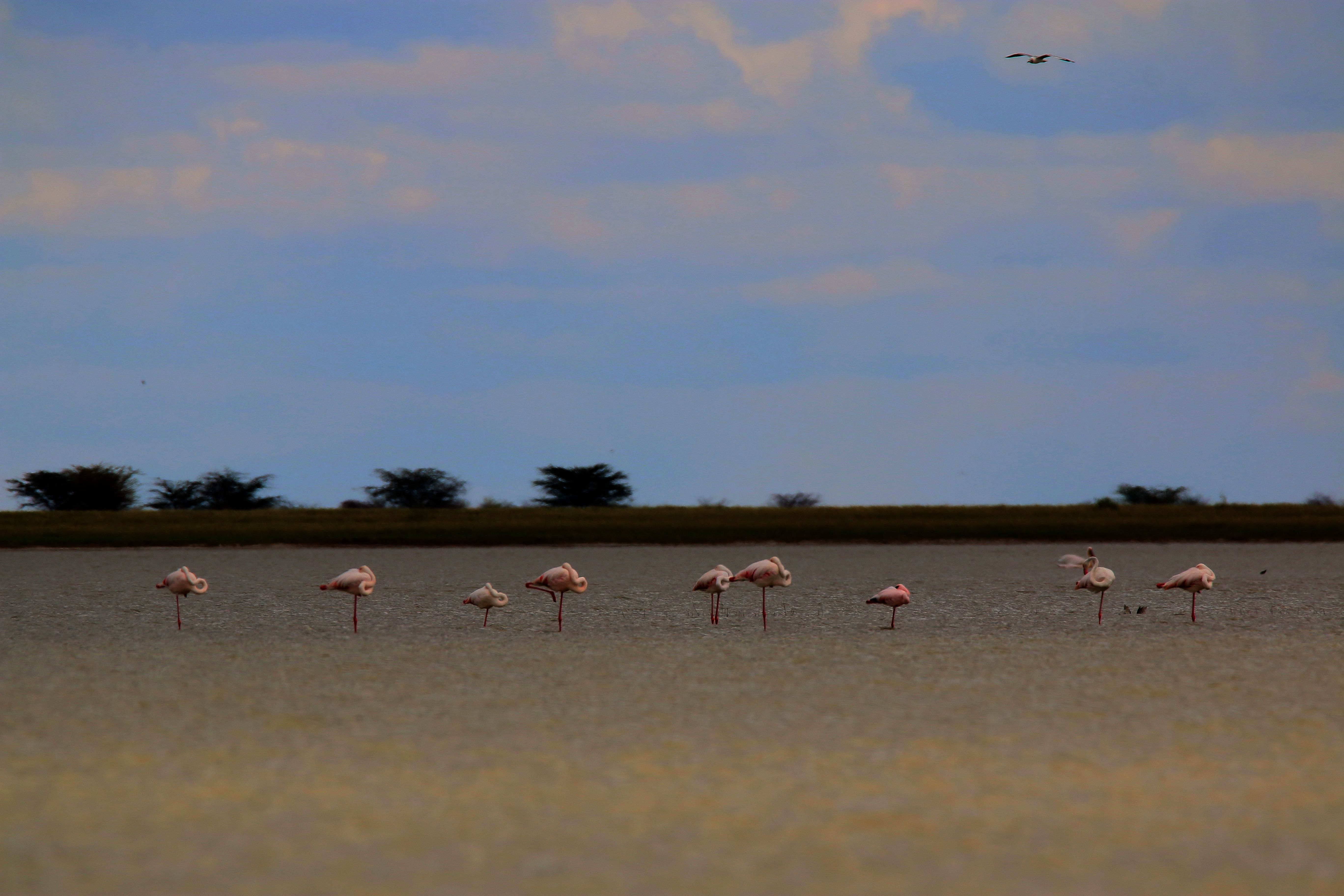 Experience the Makgadikgadi Pans with Pelican Lodge; www.pelicanlodge.co.bw, or www.facebook.com/Pelican.Lodge.Nata. A member of Africa Safari Camps, www.africasafaricamps.com. #explore | #discover | #experience | #botswana