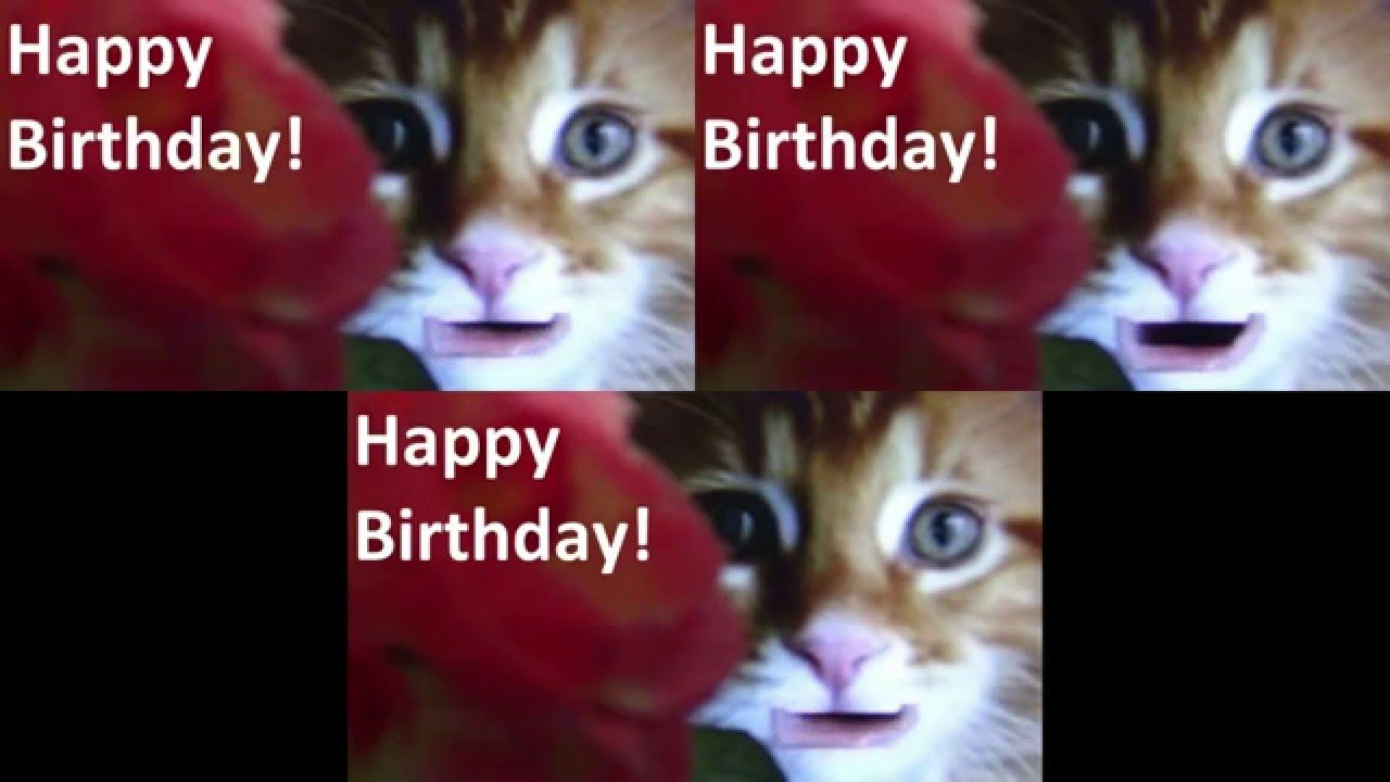"""A Funny song """"Happy Birthday"""" singing by Cute Cats"""