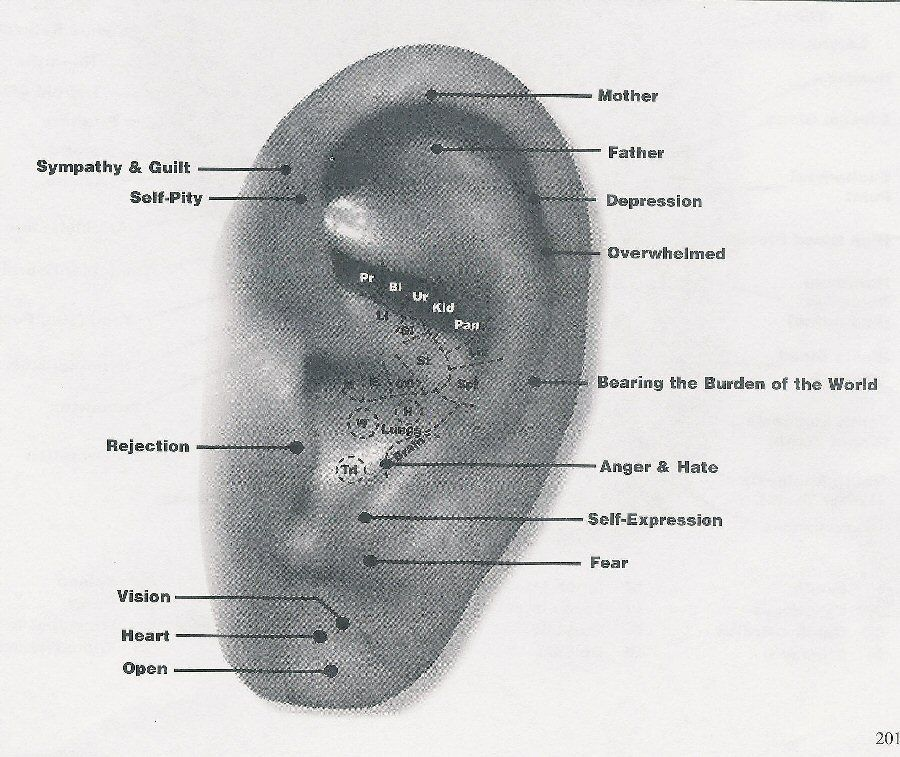 ear acupuncture points chart for emotion: Ear acupuncture points chart for emotion ear chart to map