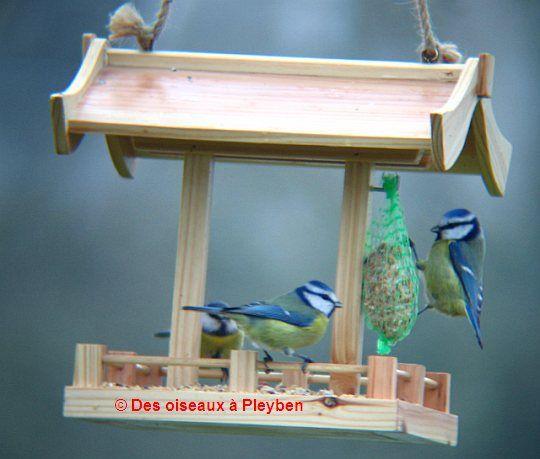 Fabrication de mangeoire pour oiseaux du jardin abris - Fabriquer mangeoire pour oiseaux du jardin ...
