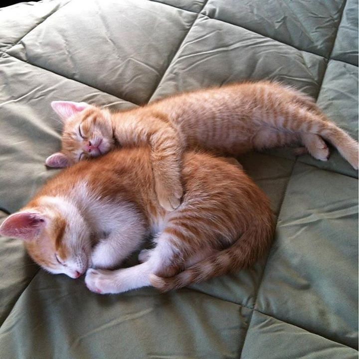 The tiny kitty is the big spoon https://t.co/AhmS33QeKz #OurCam #Photography www.ourcam.co/