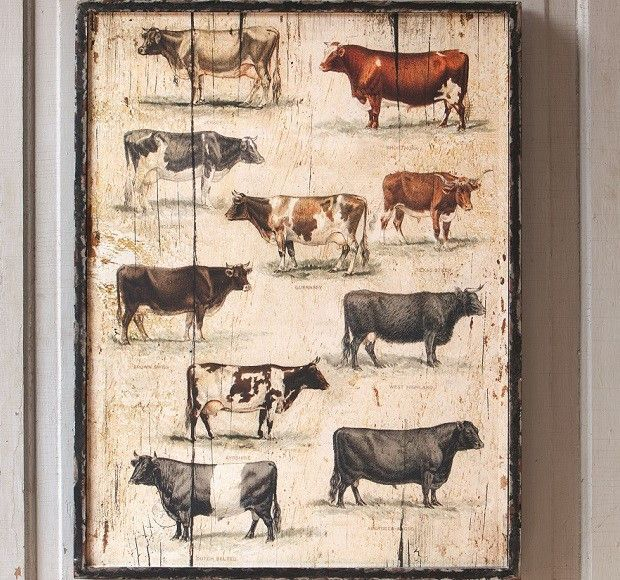 Framed Vintage Cow Breeds Wall Art Perfect Farmhouse