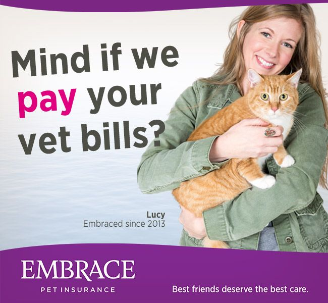 Don T Let Expensive Vet Bills Come Between You And The Best Care For Your Pet Get A Quote From Embrace Pet Insurance Toda With Images Embrace Pet Insurance Vet Bills Pets