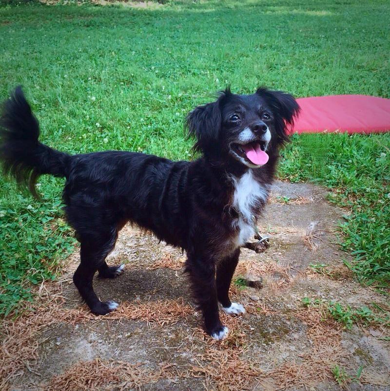 Adopt Scarlett On Petfinder Dog Adoption Kitten Adoption Pets