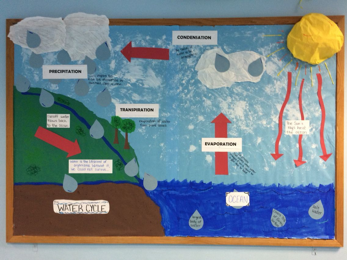 Physical Education Water Cycle Bulletin Board Water
