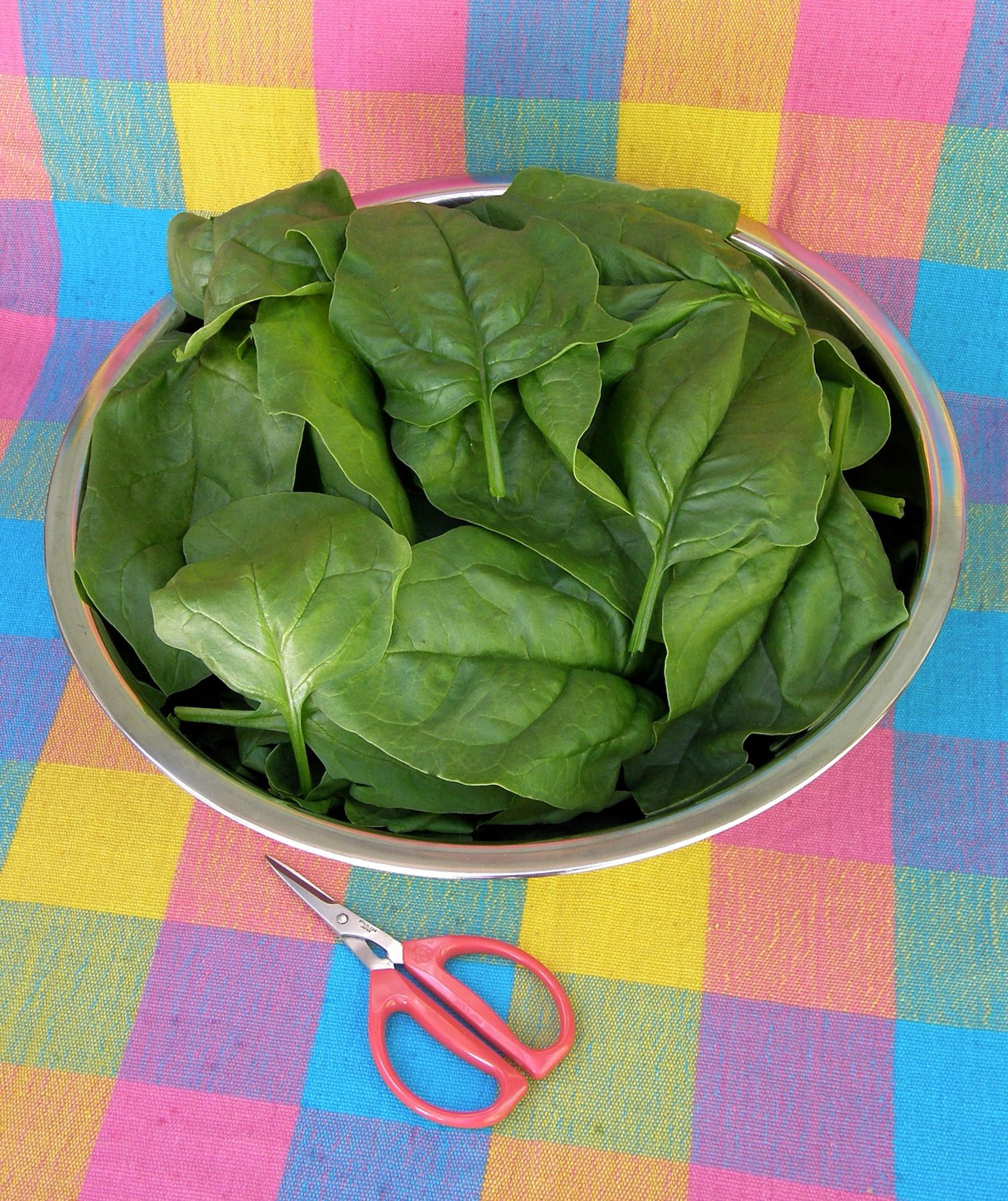 certified organic longstanding spinach gangbusters exclusive to